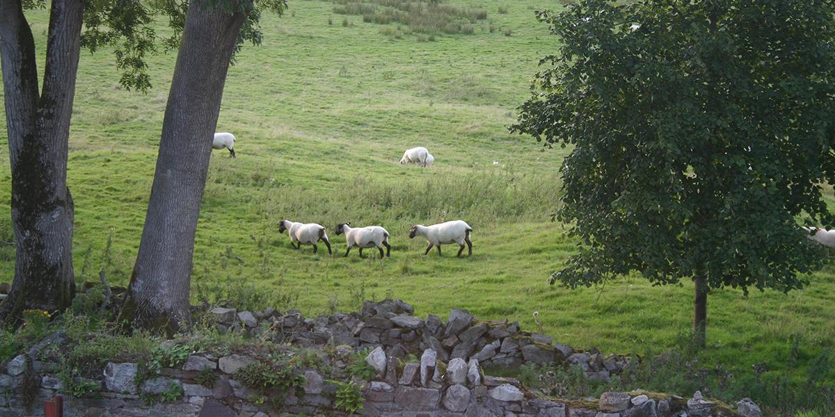 Jerpoint Park Guesthouse Accommodation Kilkenny  Slider 8